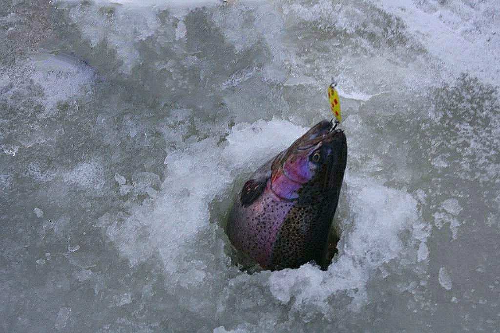 Duhák je nejčastější cílovou rybou při lovu na dirkách. Míst kam na pstruhy na dírky je u nás dost