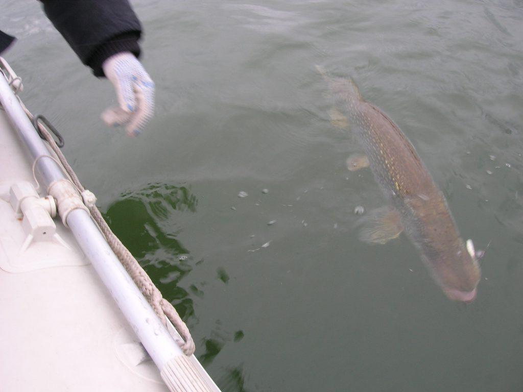 Štika je jednou z hlavních ryb při rybaření na Lipně