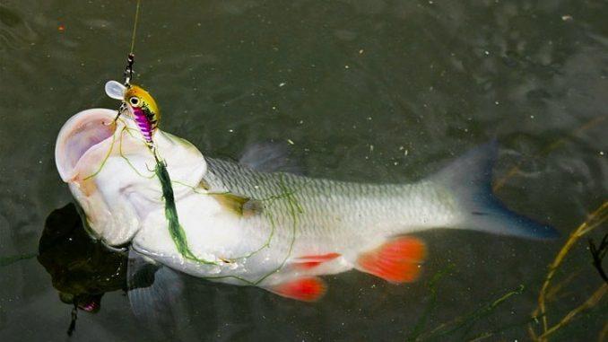 lov tloušťů na přívlač je velmi aktivní způsob lovu ryb