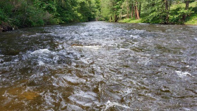 Mokrá muška funguje jak na rychlé tak i na líné vodě