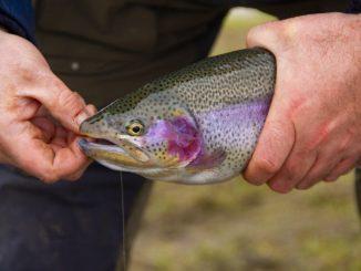 Trout Area je nový formát rybářských závodů