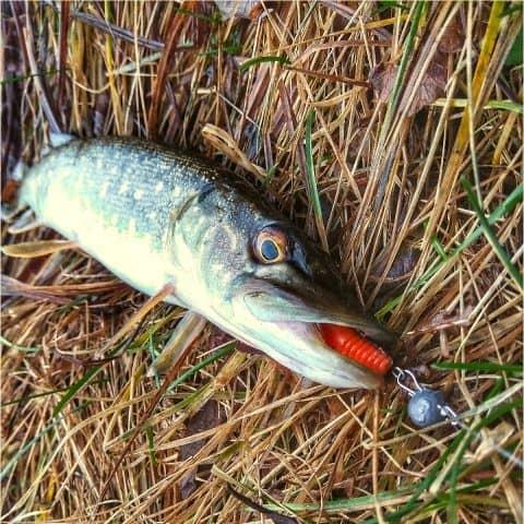 navazec na štiku musí odolat rybím zubům