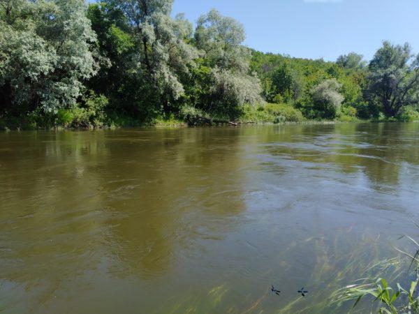 Chytat v proudu na velké řece je složité