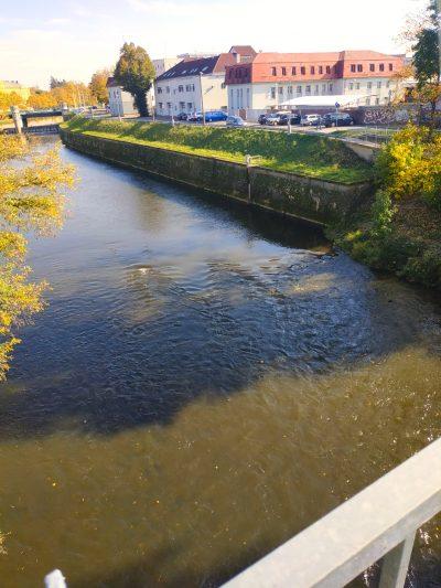 Orlice v Hradci Králové a hledání kaprů na řece