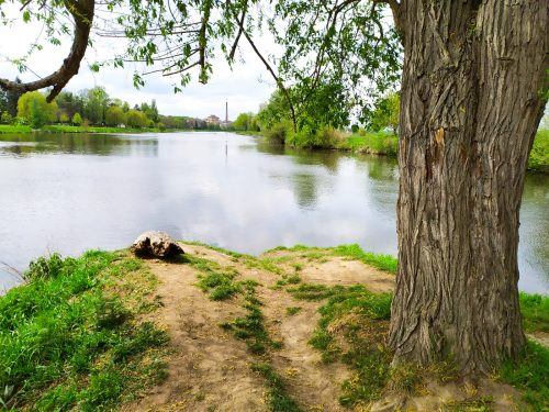 rybaření na Jizeře u soutoku s Labem. Vlasec na kapry