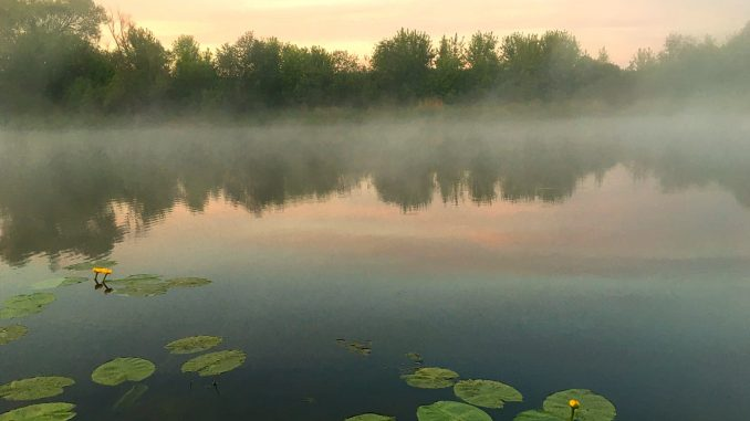 brzké ráno je ideální pro plavanou na kapry