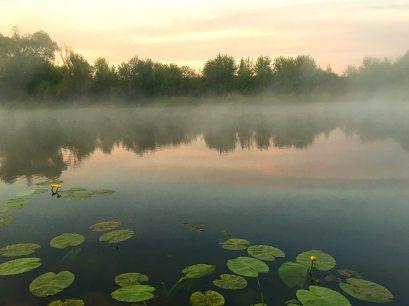 brzké ráno je ideální pro plavanou na kapry a lov kaprů v léte